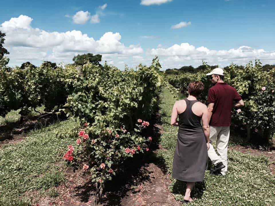 Wine tours in Uruguay